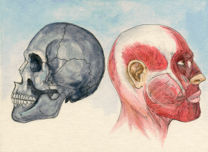 Anatomy Watercolor 6x8