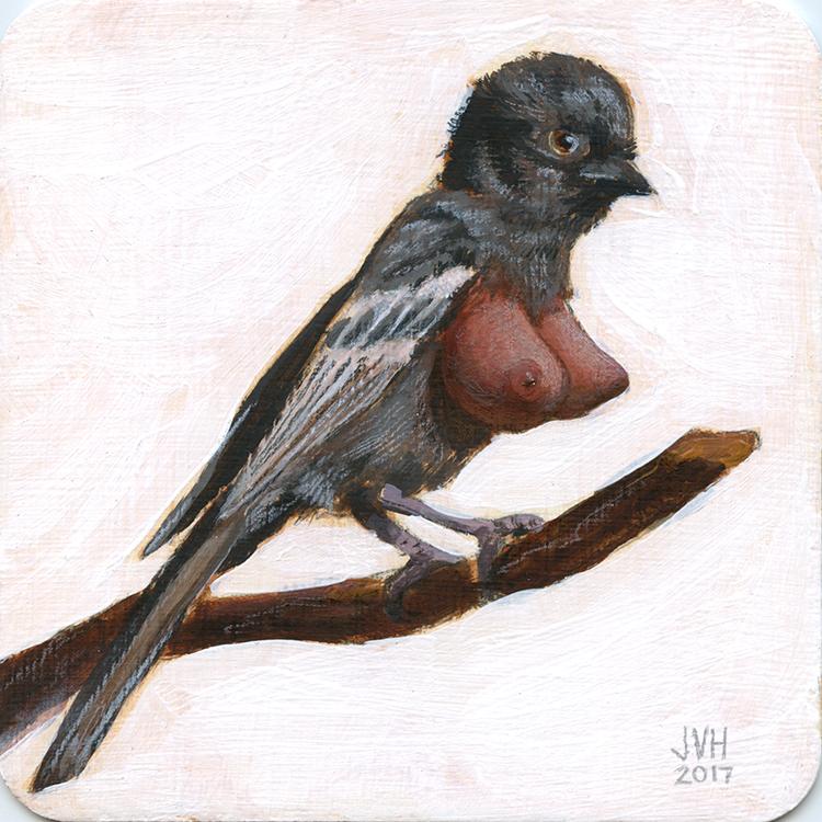 Southern Black Tit Melaniparus Niger